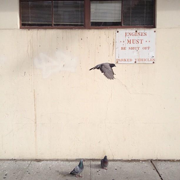 pigeon_engine
