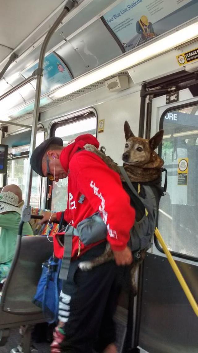 backpack_dog