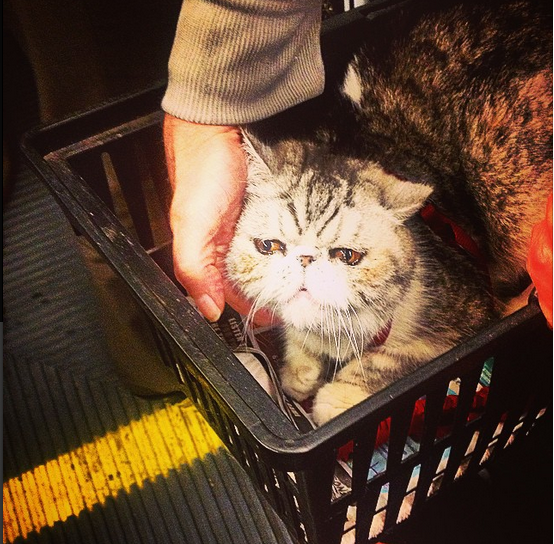 cat on muni by tashahasfun