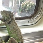 Found: The Most Cold-Blooded Muni Rider Ever