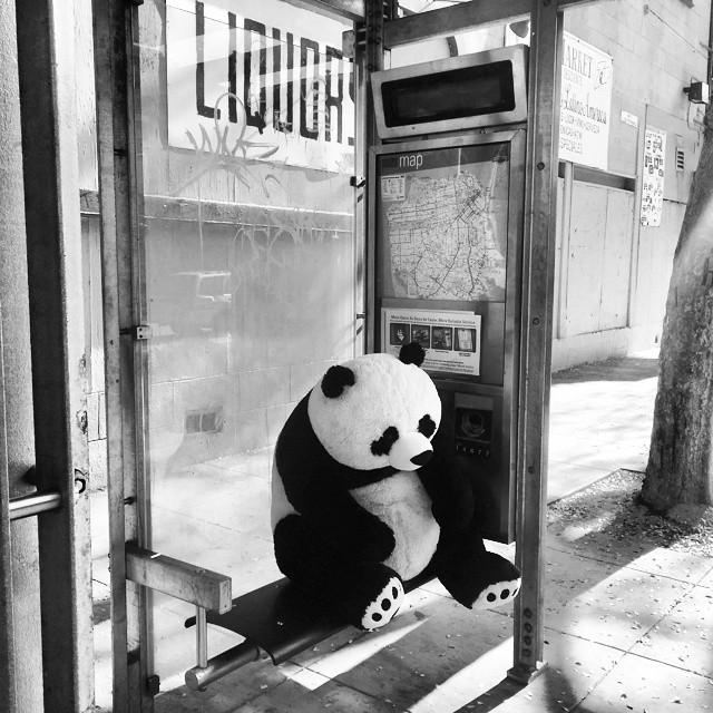 sleeping_panda