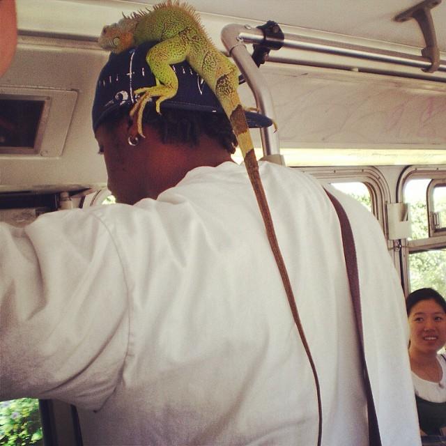 iguana-on-my-head-muni