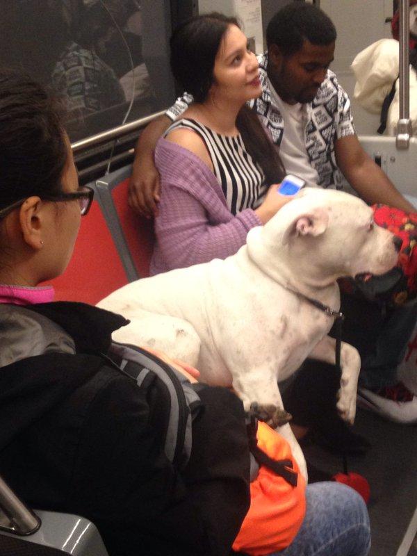 dog_seat