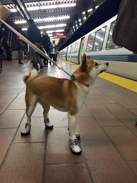 doge_in_boots