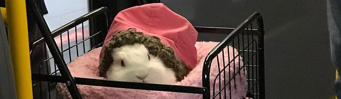 rabbit bunny on muni in a bed by dhmspector feat